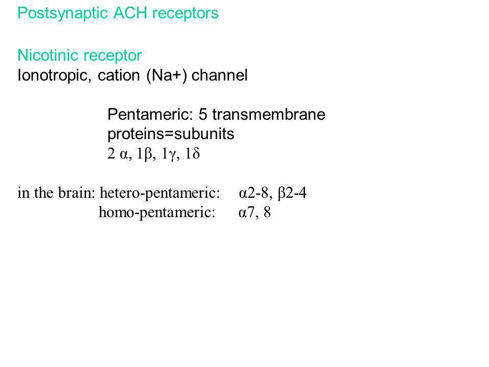 Postsynaptic ACH receptors