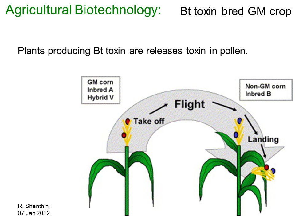 French study on gm corn