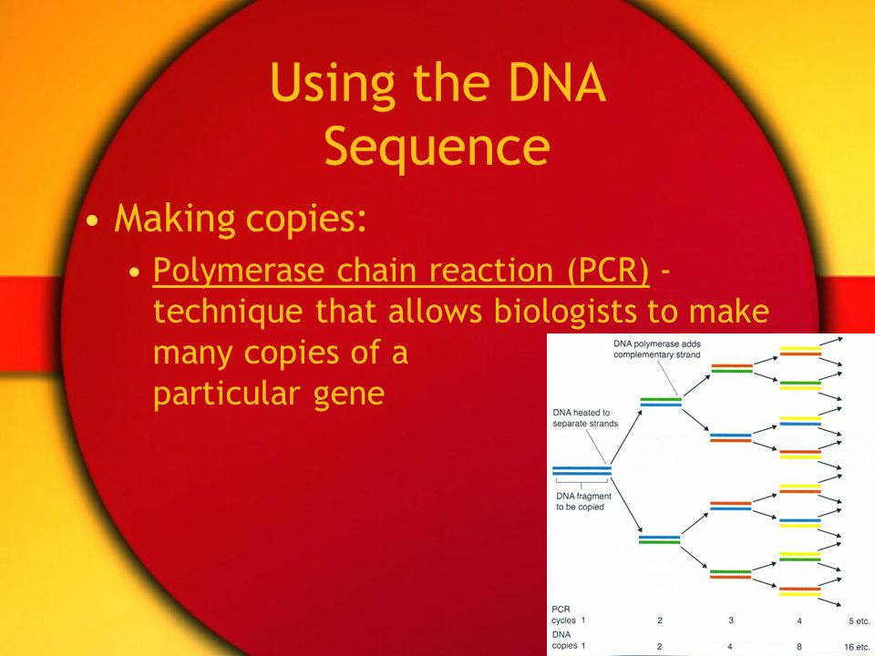 Using the DNA Sequence Making copies: