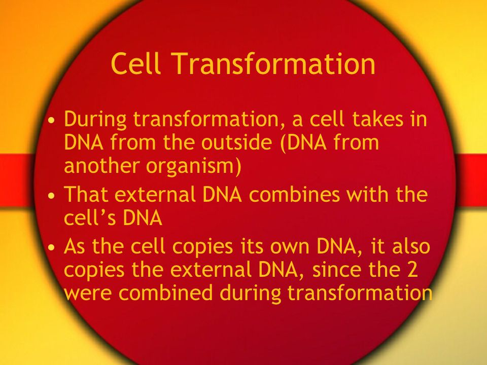 Cell Transformation During transformation, a cell takes in DNA from the outside (DNA from another organism)