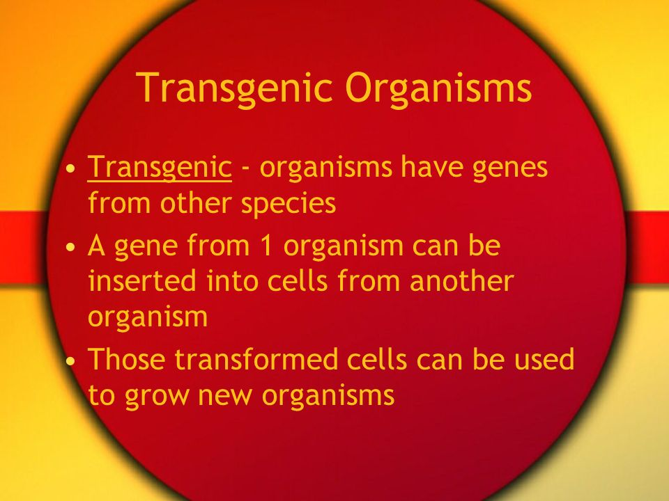Transgenic Organisms Transgenic - organisms have genes from other species. A gene from 1 organism can be inserted into cells from another organism.
