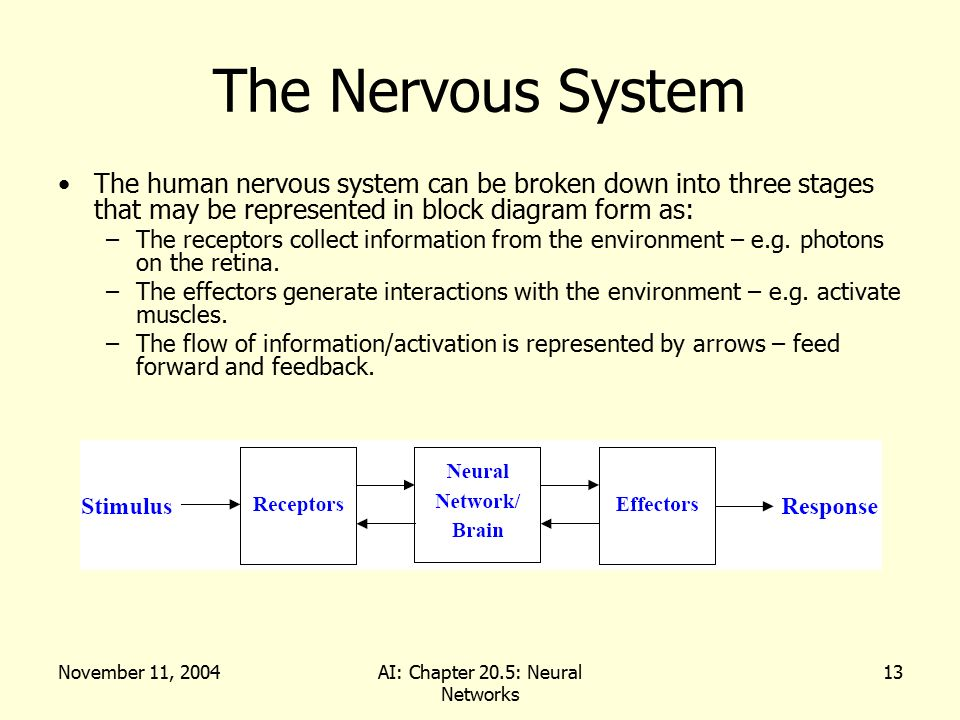 Artificial intelligence chapter 205 neural networks ppt download 13 ai chapter 205 neural networks the nervous system ccuart Choice Image