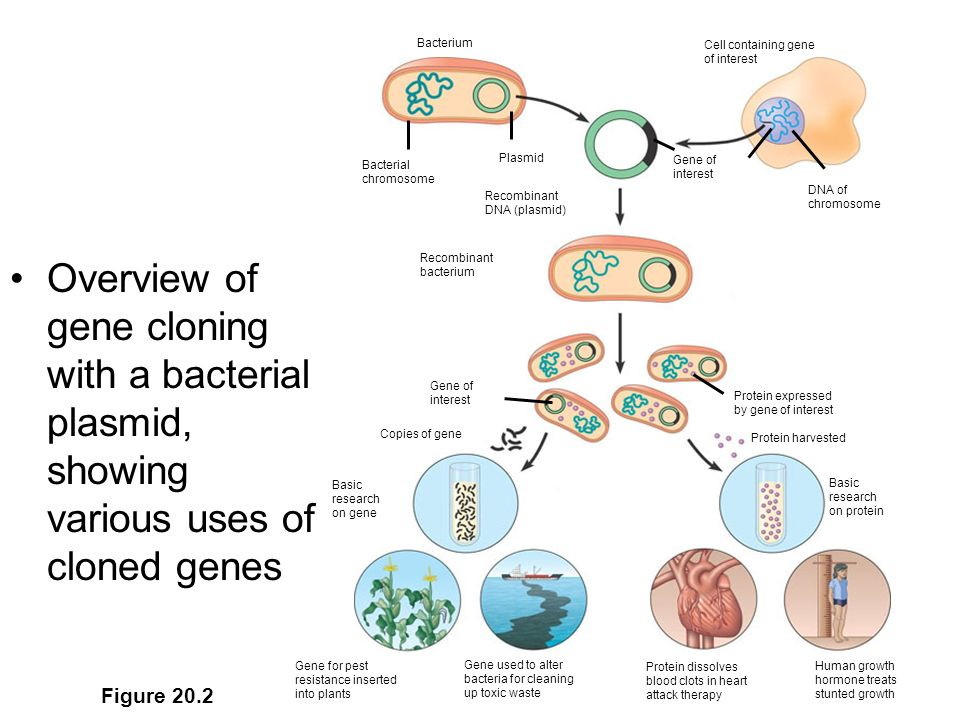 Human cloning developments raise hopes for new treatments