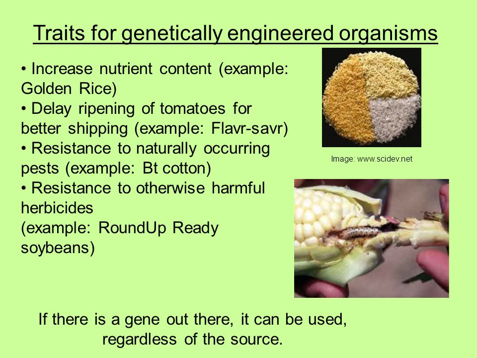 for better or worse genetically modified organisms Critics and proponents of genetically modified organisms (gmos) alike agree that genetically modified foods have failed to produce any untoward health effects, and that the risk to human health.