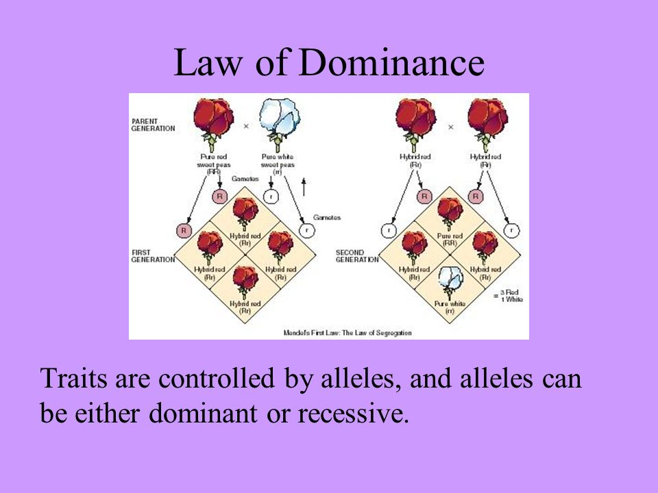 law of dominance - photo #17