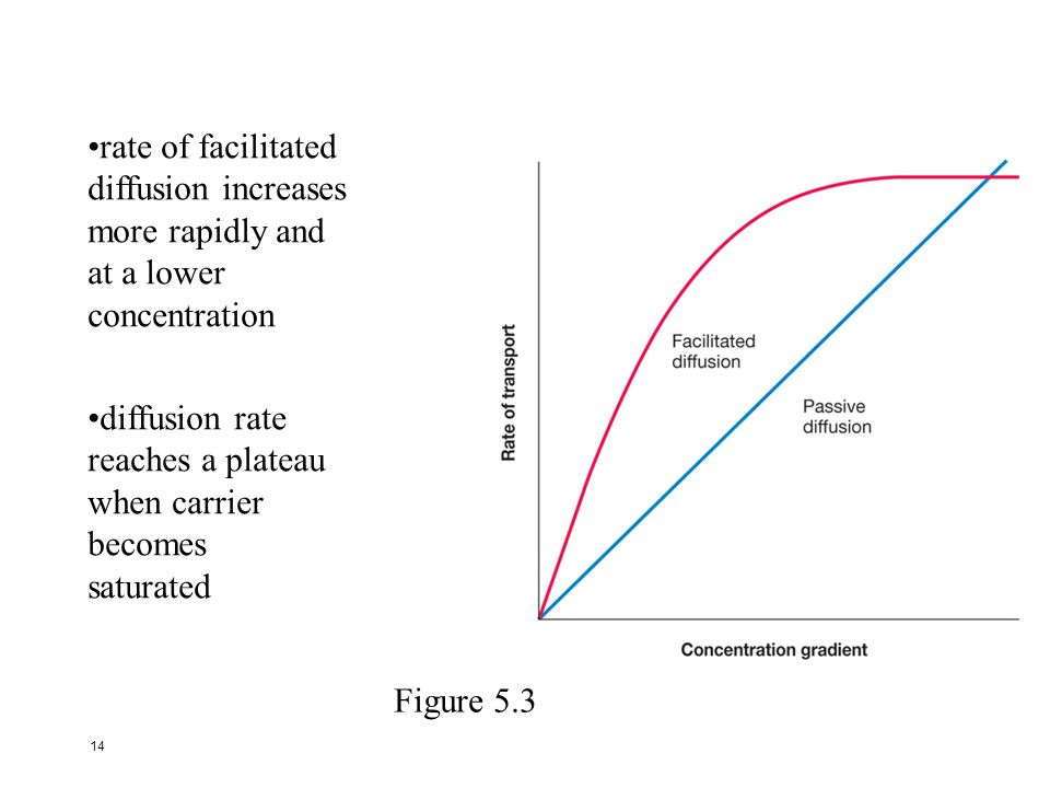 rate of facilitated diffusion increases. more rapidly and. at a lower. concentration. diffusion rate.