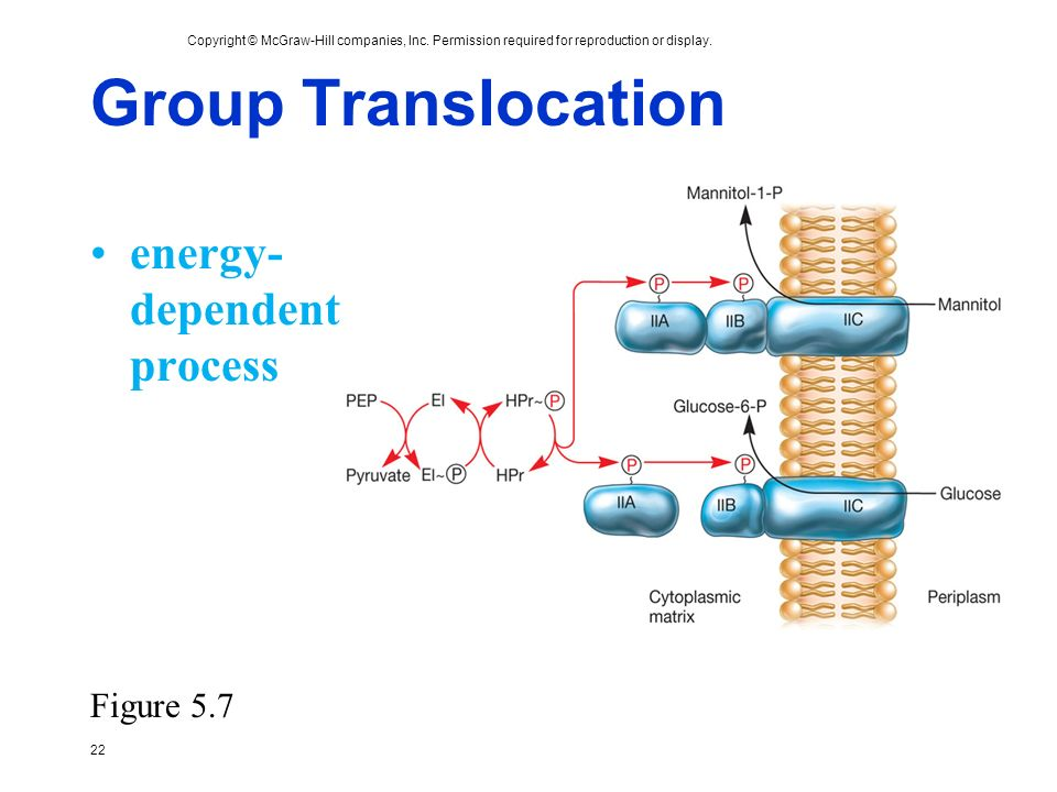 Group Translocation energy-dependent process Figure 5.7