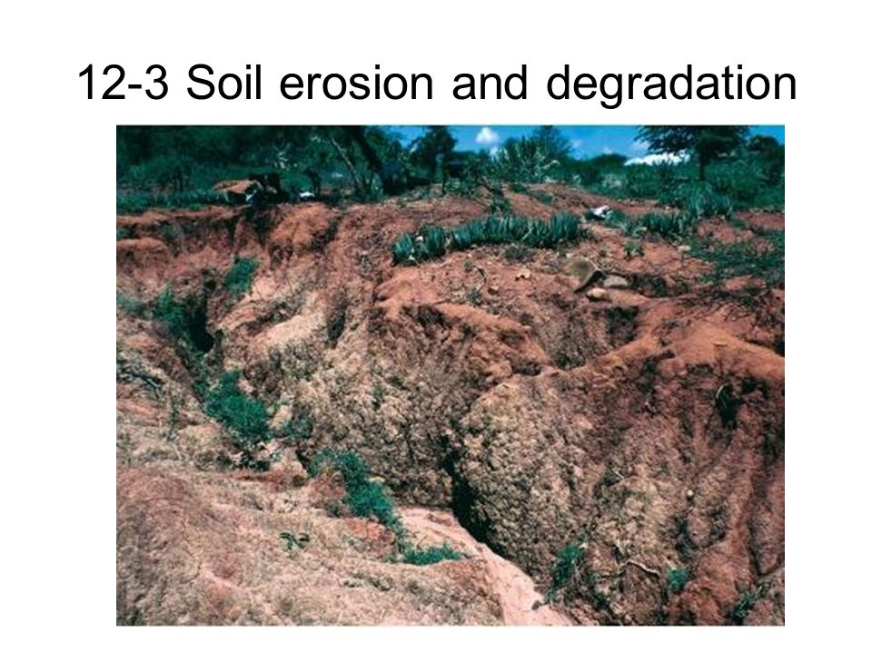 Food and soil resources ppt download for What is soil resources