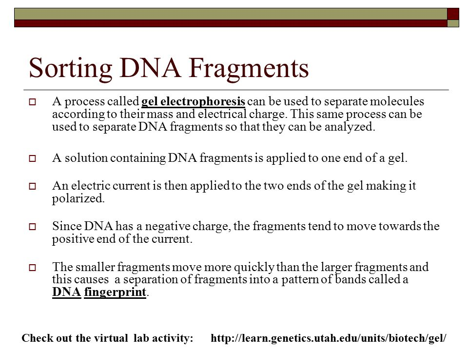 chapter 18 genetics ahead ppt download. Black Bedroom Furniture Sets. Home Design Ideas