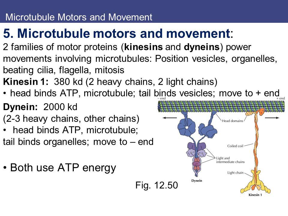 cilia and flagella movement pdf