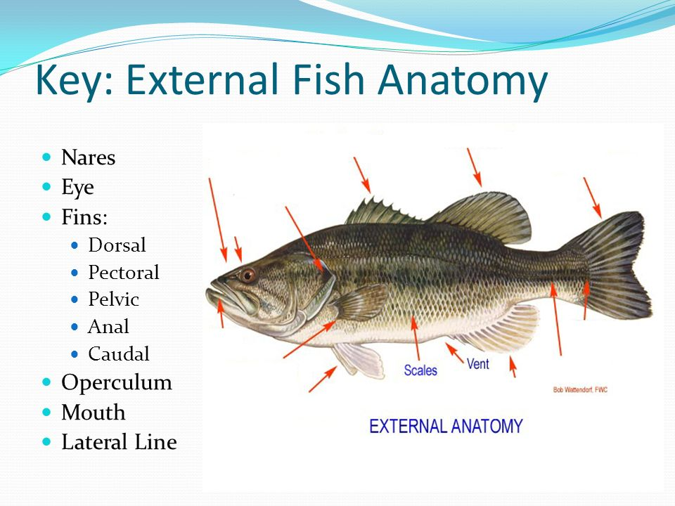 External fish anatomy 6683359 - follow4more.info