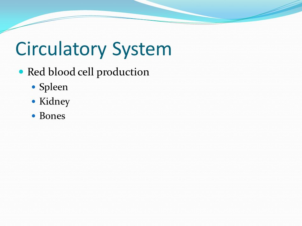 Circulatory System Red blood cell production Spleen Kidney Bones