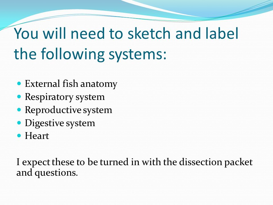 You will need to sketch and label the following systems:
