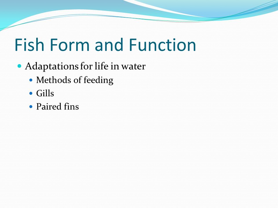 Fish Form and Function Adaptations for life in water