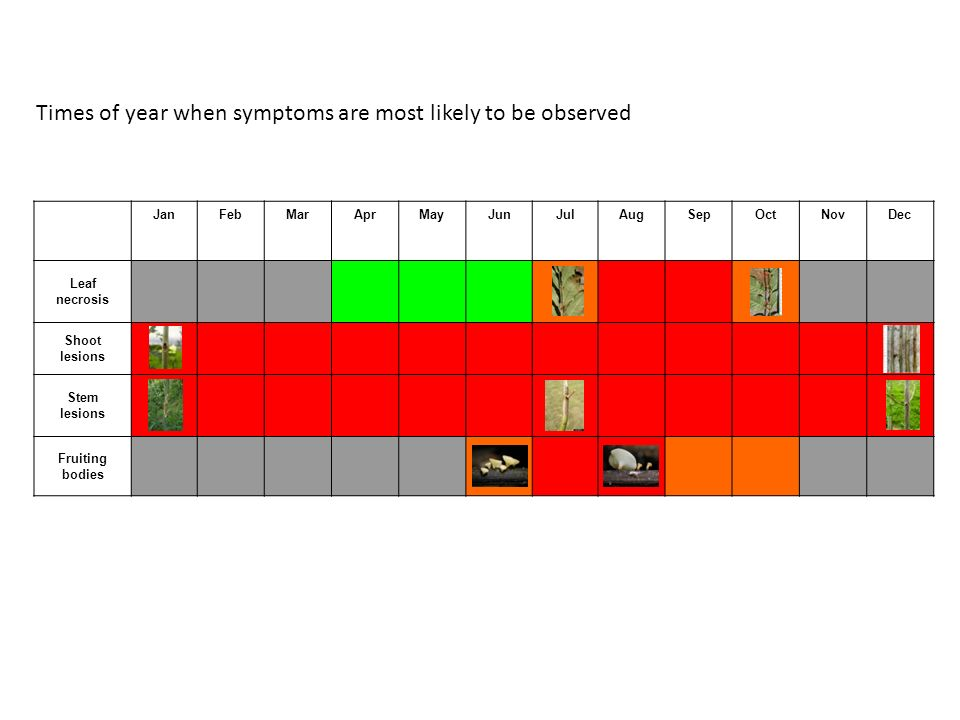 Times of year when symptoms are most likely to be observed