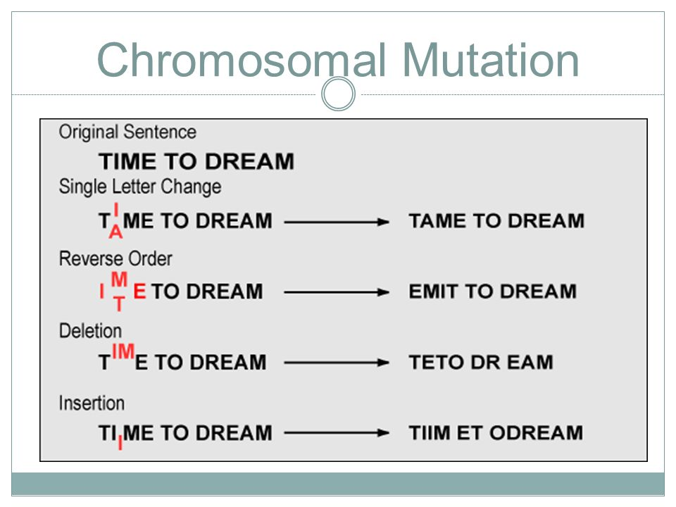 DNA RNA Protein Synthesis ppt video online download – Chromosomal Mutations Worksheet