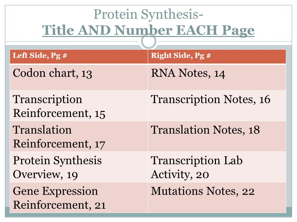 Dna rna and protein synthesis worksheet