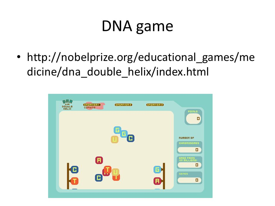 dna ppt video online download