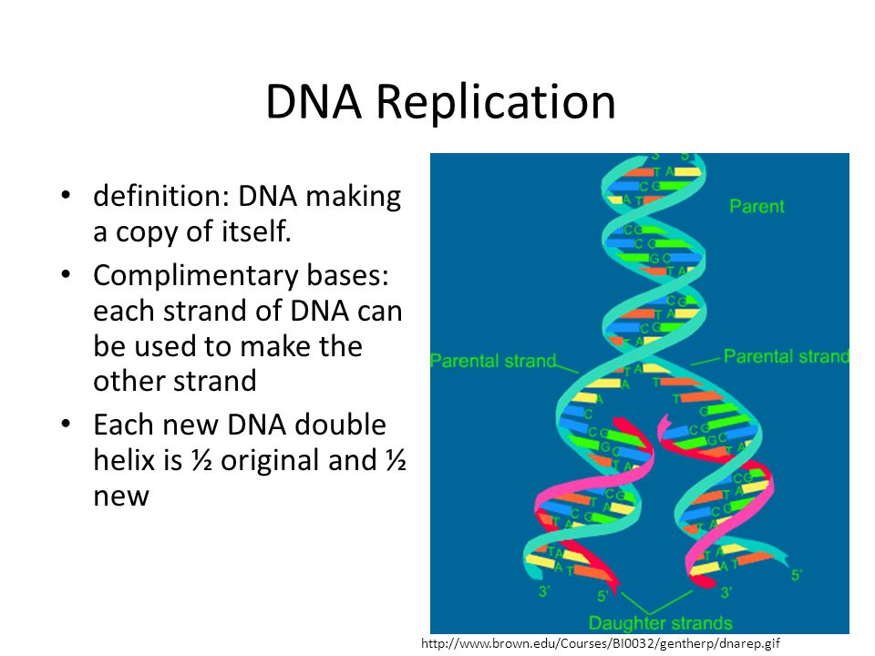 scientific analysis paper on dna replication A new direct single-molecule observation method for dna synthesis reaction using fluorescent replication protein a shunsuke takahashi 1, shohei kawasaki 1,.