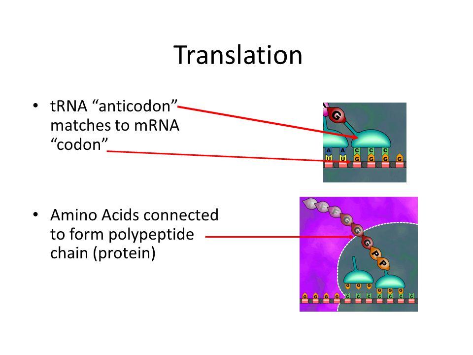 DNA. - ppt video online download