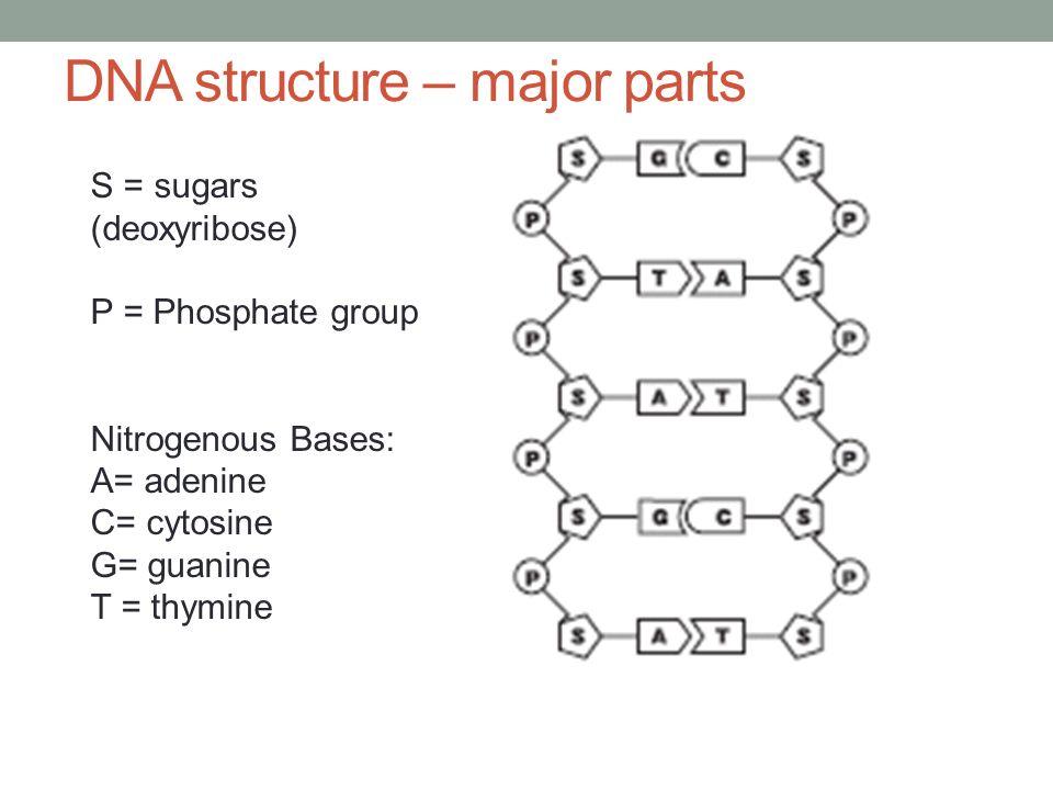 Agenda: 3/26 Warm-up: Bill Nye – Understanding DNA - ppt ...