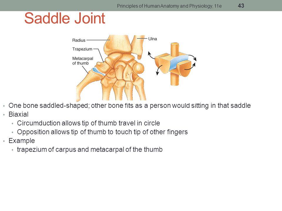 Ungewhnlich Anatomy And Physiology Of Joints Zeitgenssisch