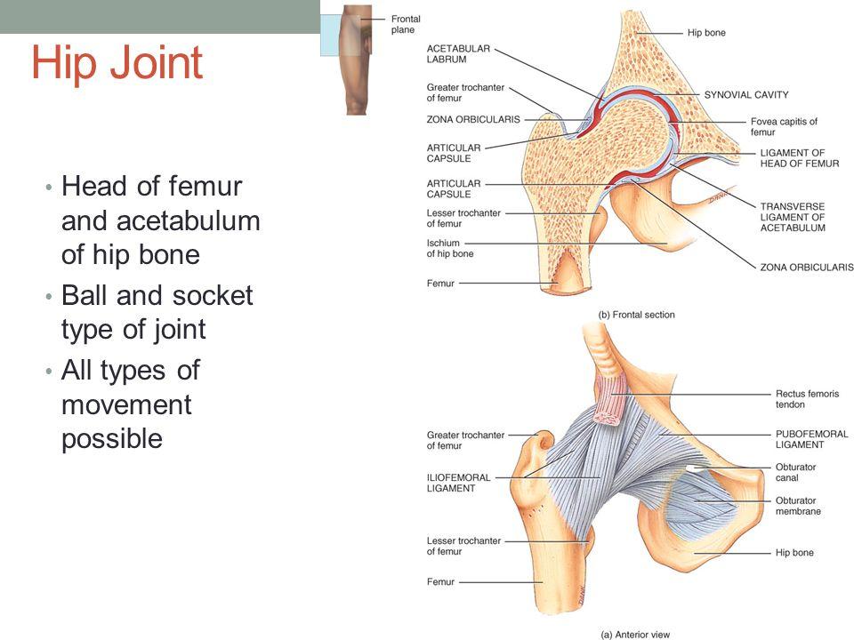 principles of human anatomy and physiology pdf