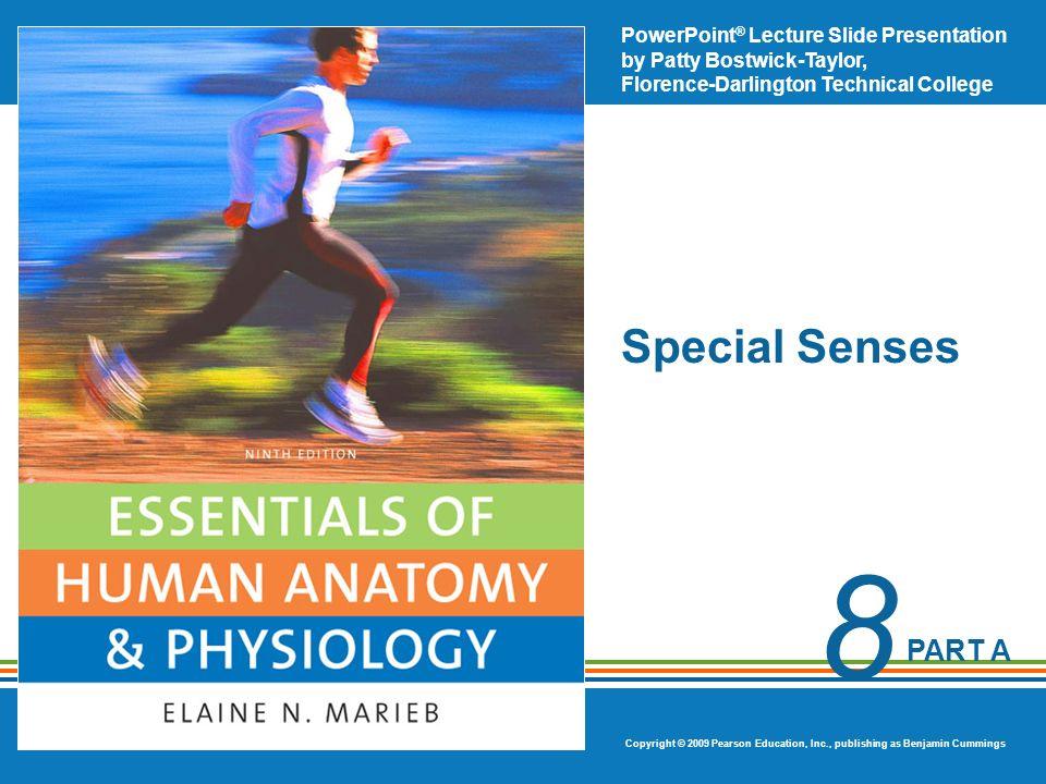 Special Senses. - ppt video online download
