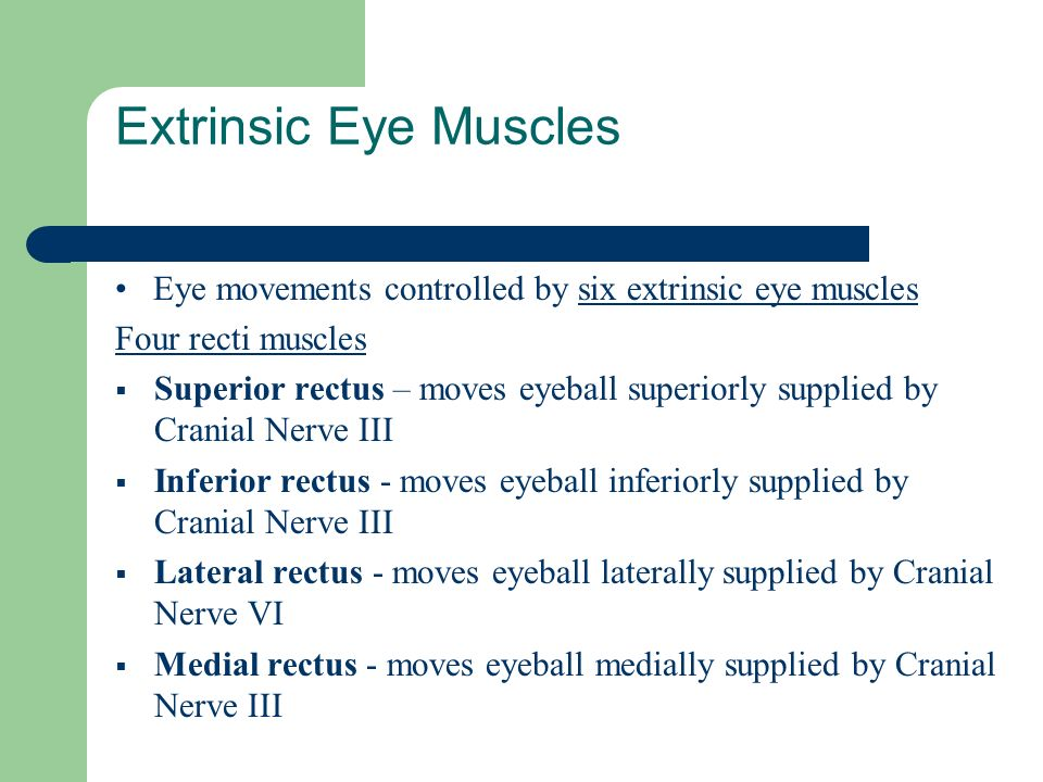 Extrinsic Eye Muscles • Eye movements controlled by six extrinsic eye muscles. Four recti muscles.