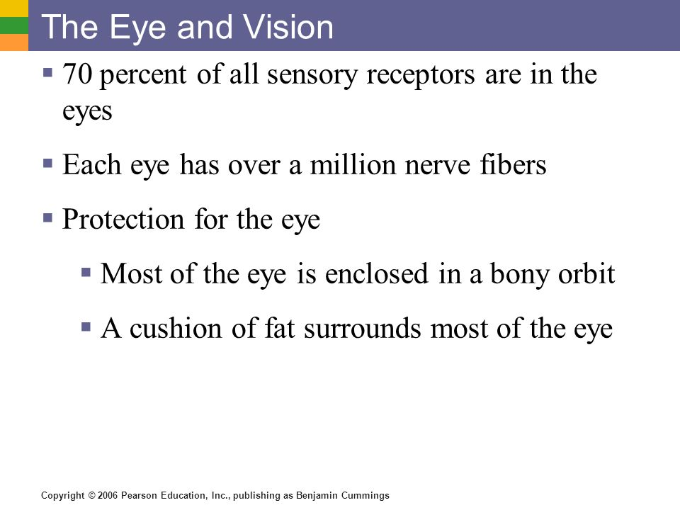 The Eye and Vision 70 percent of all sensory receptors are in the eyes
