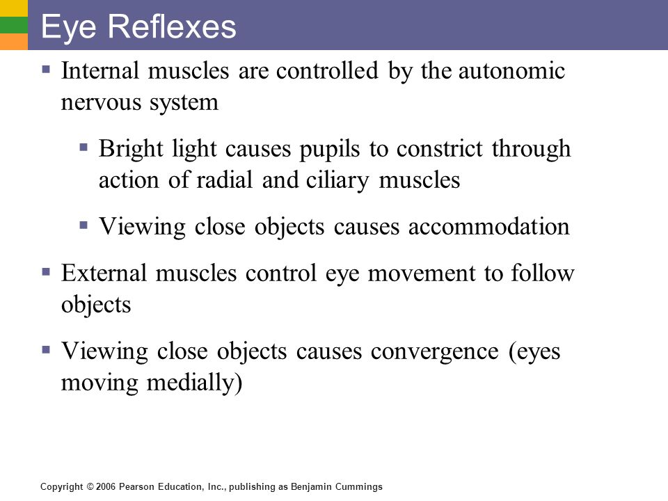 Eye Reflexes Internal muscles are controlled by the autonomic nervous system.