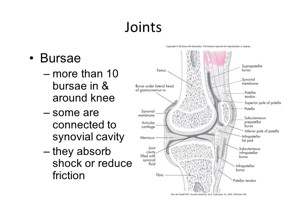 Fine What Is The Abcd Rule In Anatomy Ensign - Anatomy And ...