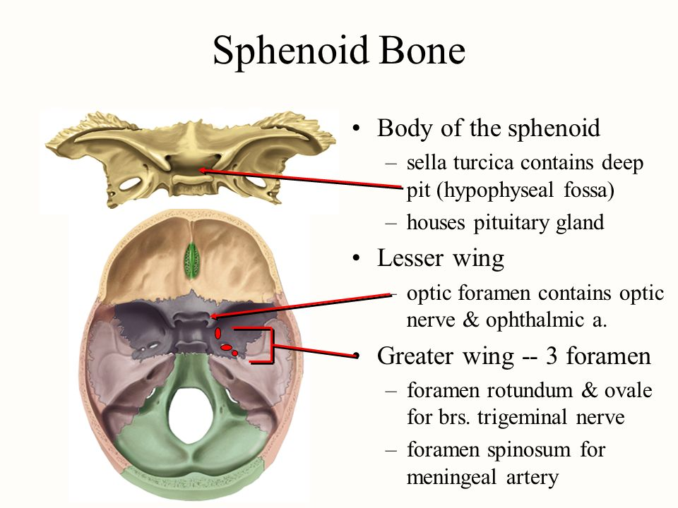 chapter 9 the skeletal system - ppt download, Human Body