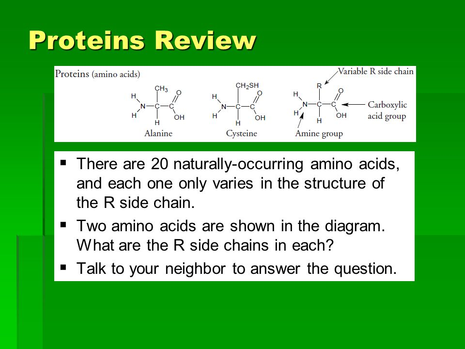 Proteins Review There are 20 naturally-occurring amino acids, and each one only varies in the structure of the R side chain.