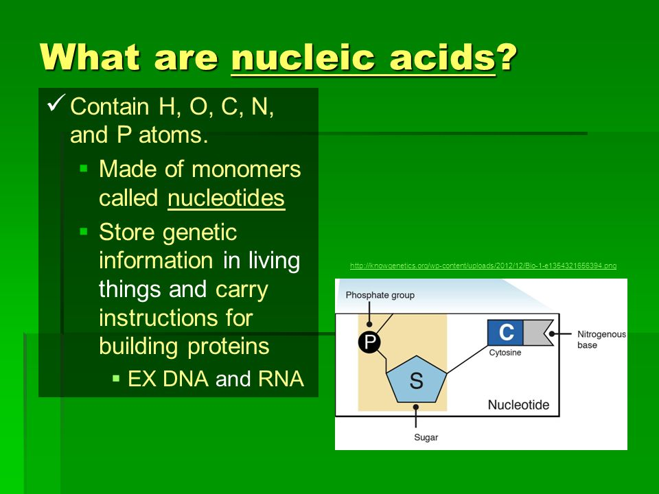 What are nucleic acids Contain H, O, C, N, and P atoms.