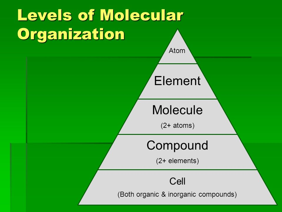 Levels of Molecular Organization