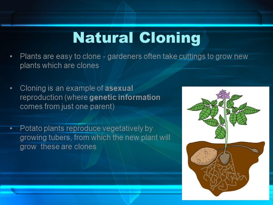 cloning genetic engineering ppt download. Black Bedroom Furniture Sets. Home Design Ideas