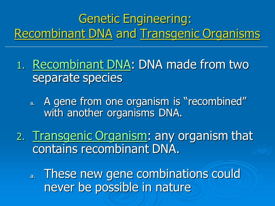 how to make a transgenic species