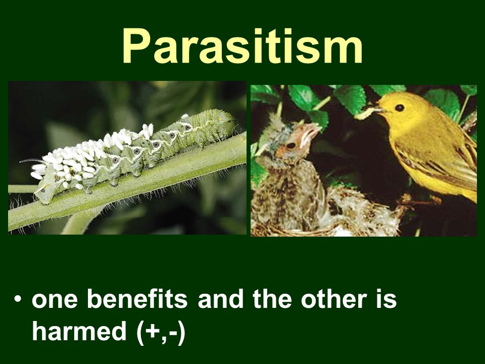 Parasitism one benefits and the other is harmed (+,-)