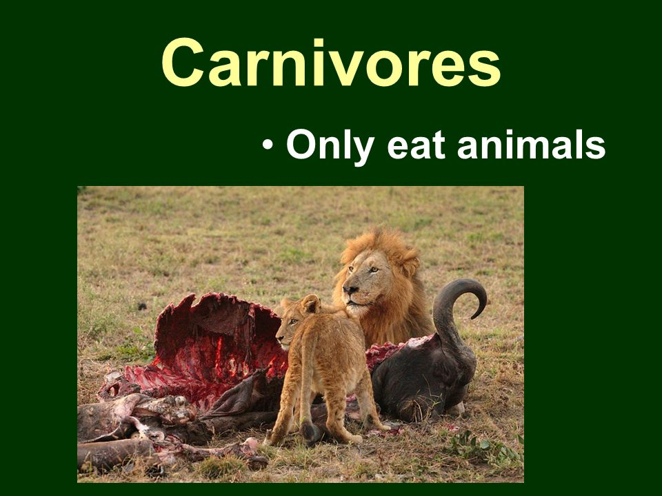 Carnivores Only eat animals
