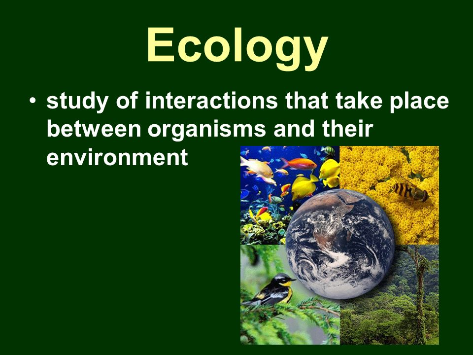 Ecology study of interactions that take place between organisms and their environment
