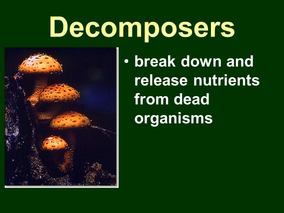 Decomposers break down and release nutrients from dead organisms