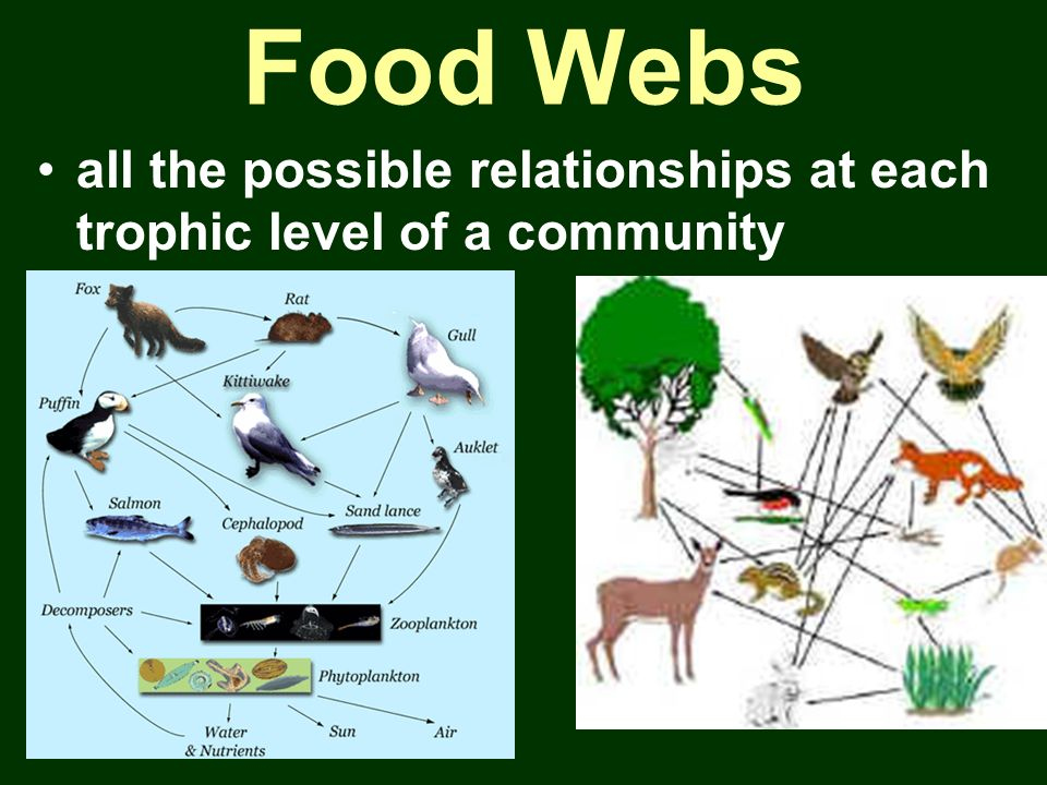 Food Webs all the possible relationships at each trophic level of a community