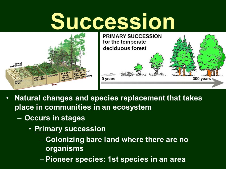 Succession Natural changes and species replacement that takes place in communities in an ecosystem.