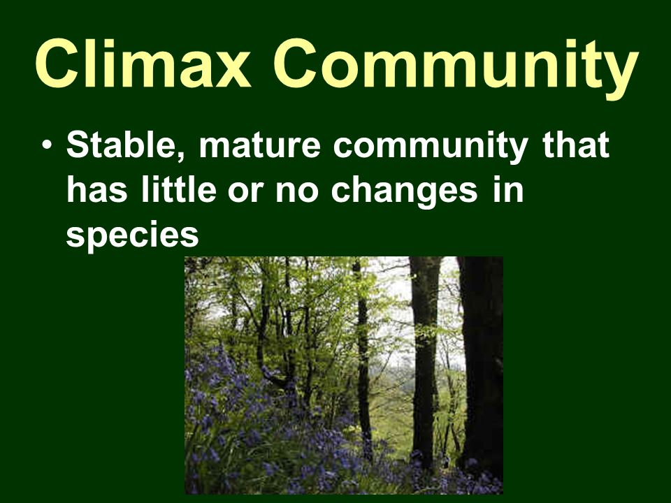 Climax Community Stable, mature community that has little or no changes in species