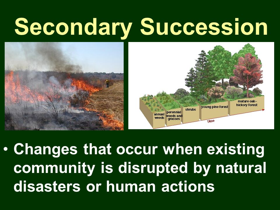 Secondary Succession Changes that occur when existing community is disrupted by natural disasters or human actions.