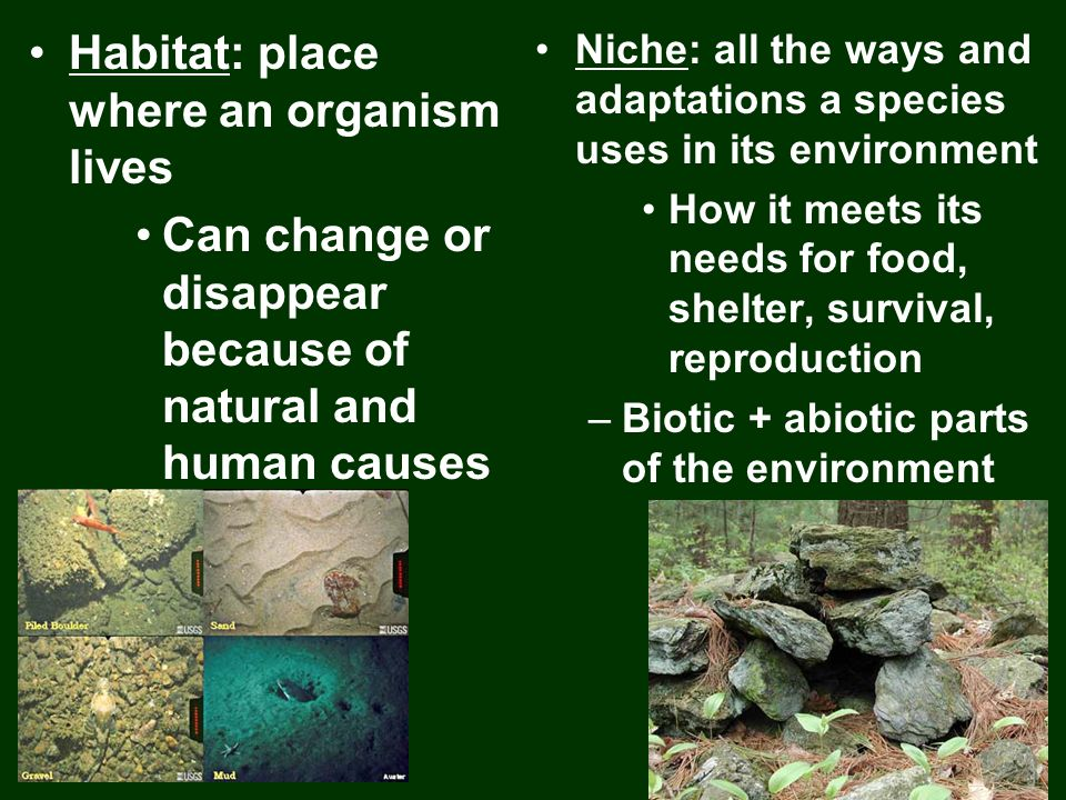 Habitat: place where an organism lives