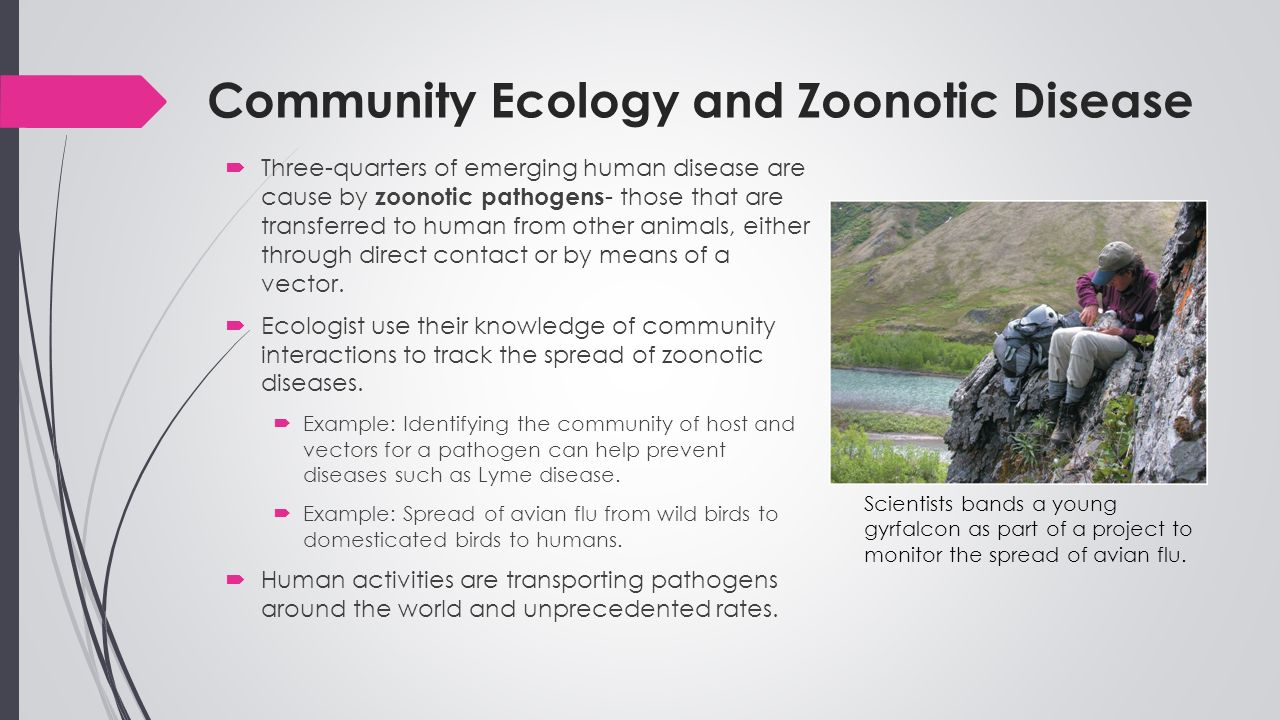 worksheet Community Interactions Worksheet announcements turn in the community interactions worksheet to ecology and zoonotic disease