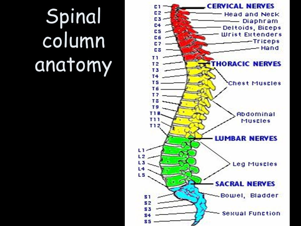 Anatomy of a column