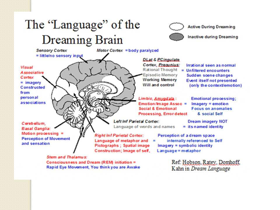 the differences between day dreams and night dreams